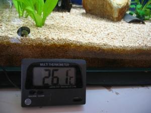 デジタル水温計