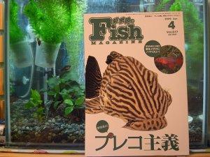 Fish Magazine 2009-4