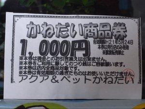 かねだい1000円商品券