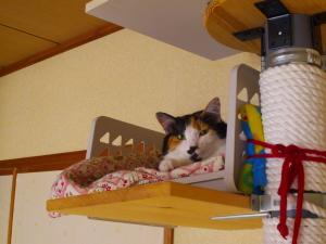 自作キャットタワーで朝寝する三毛猫ミー