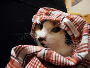 三毛猫ミーちゃん