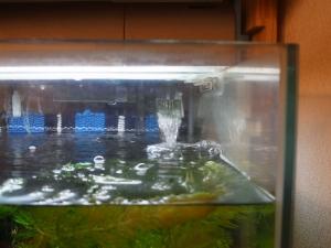 水位が下がったカメⅡ水槽