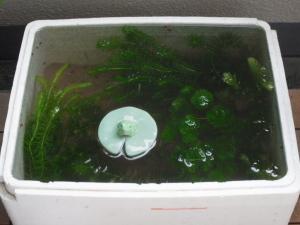 水草ストック槽