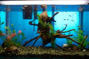 カブトニオイガメのカメ水槽