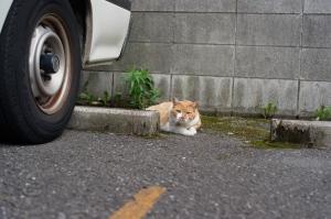 品川区のネコ